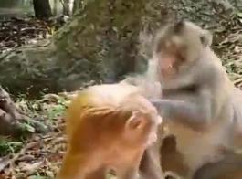 اباحي حيوانات مع بشر