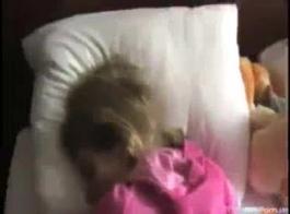 عسل ياباني يدعم كسها المحلوق فوق قضيب اصطناعي ضخم